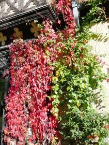 Lieder, Blätter, Wälder: Im Herbst alle bunt.