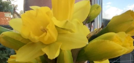 Hinterm Frühling