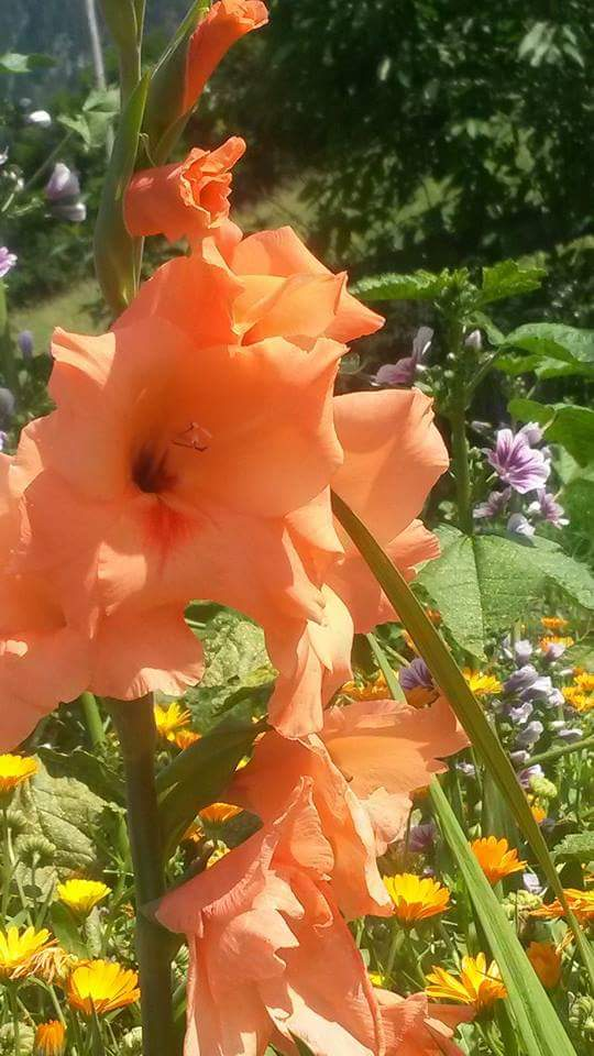 Sonnenschein auf der Blumenwiese