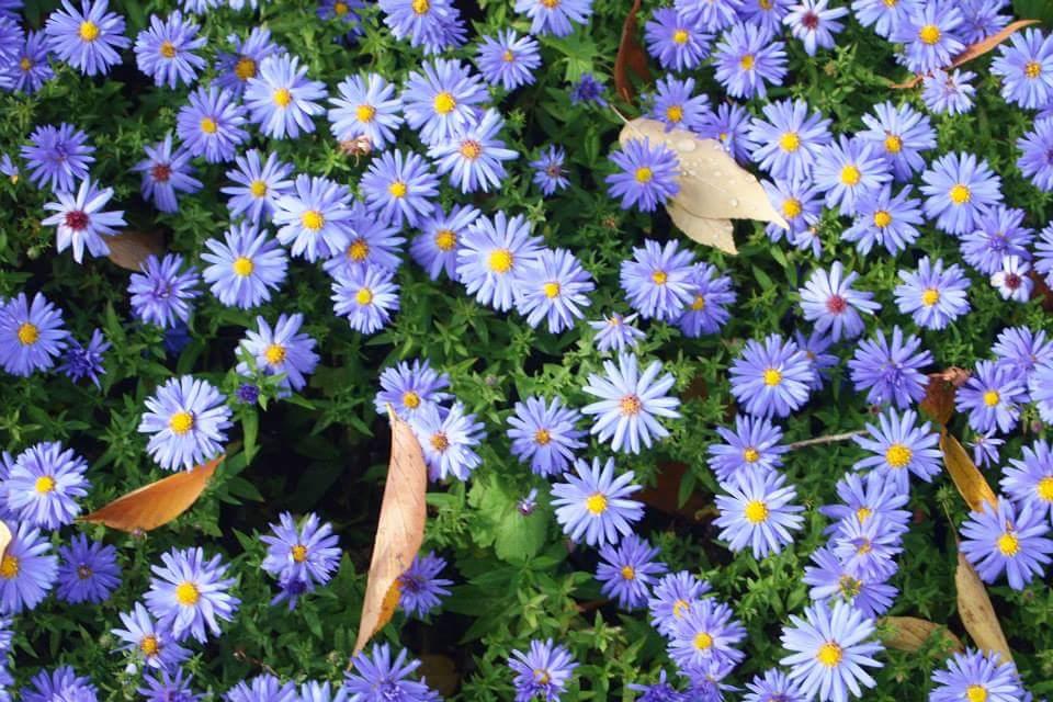 Blumen machen das Sommerbild schön rund!